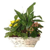 Mixed plants in basket